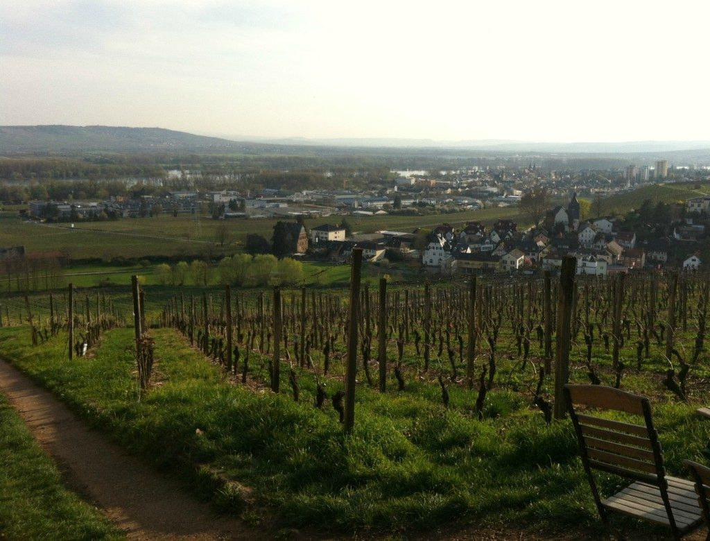 Rheingau Blick von Johannisberg