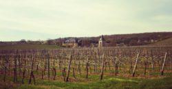 Weintour im Rheingau