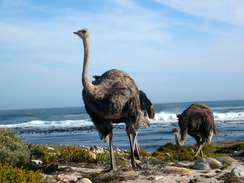 Modern Hippie_ Cape Point Nationalpark_Südafrika_1