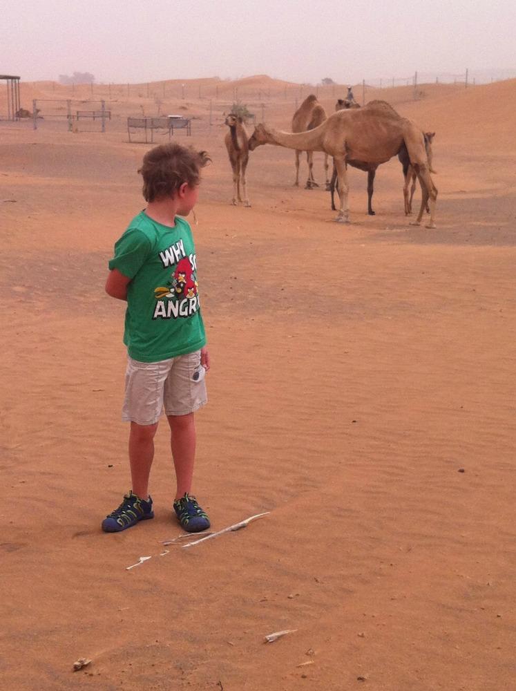 Wüste_Liam Kamele