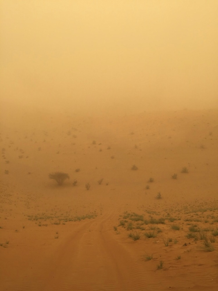 Wüste_Stur2