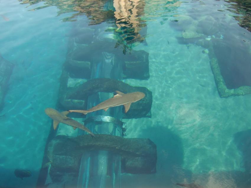 Aquaventure Haitunnel