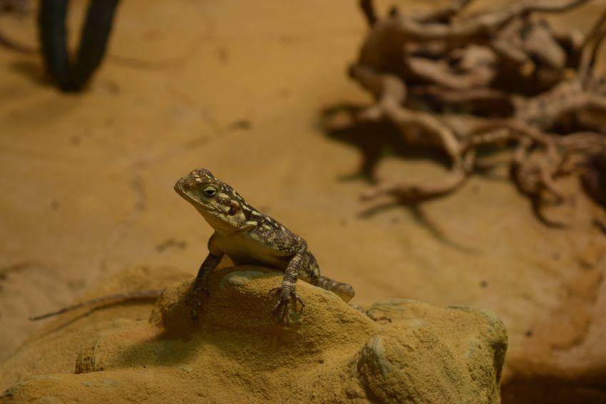 Osnabrück Zoo Salamander