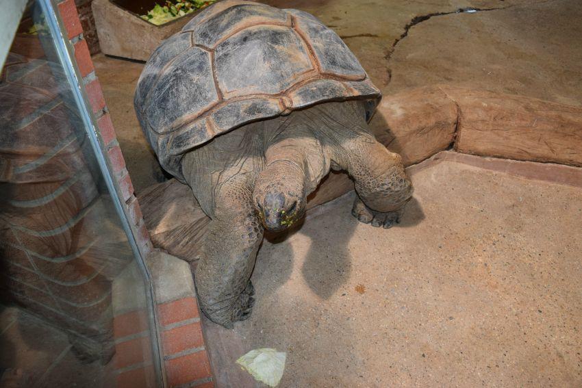 Osnabrück Zoo Schildkröte