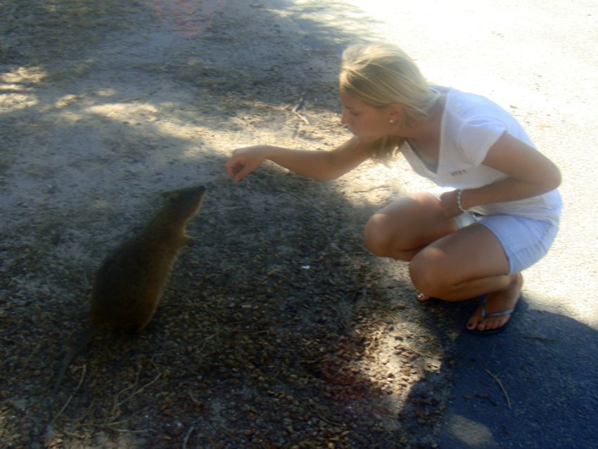 Rottnest Island Quokka Carolin Breathing Travel