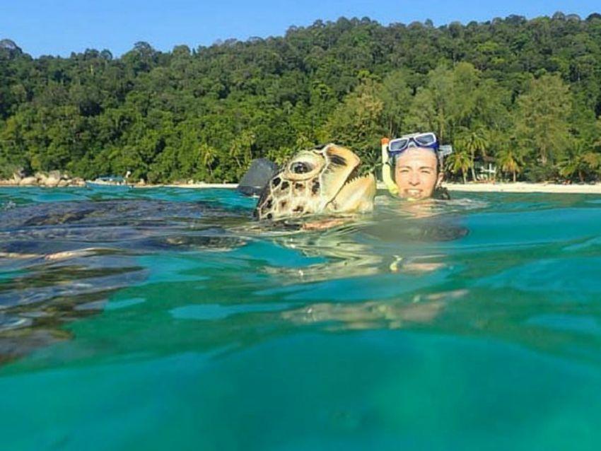 Schildkröte Reiseaufnahmen