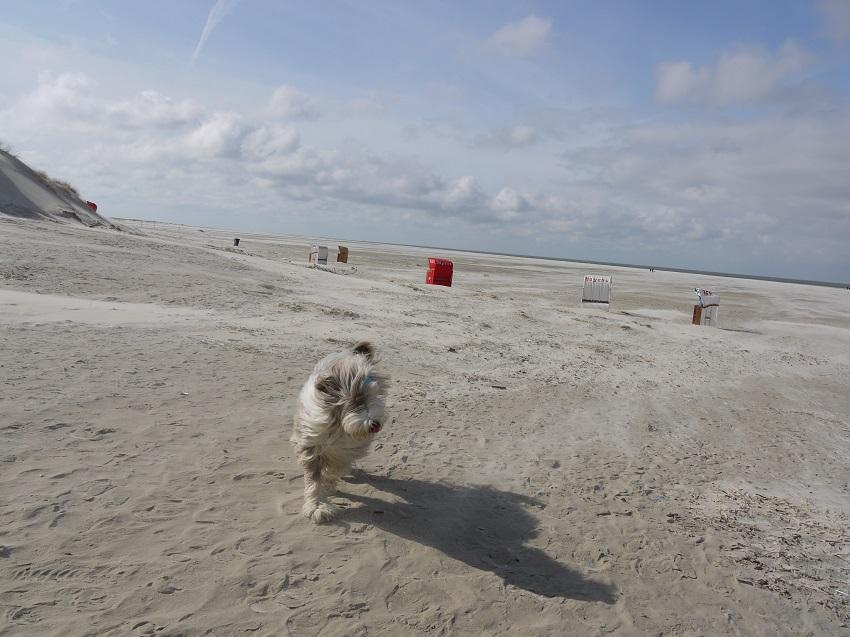 Amrum Strand und HundMeerblog
