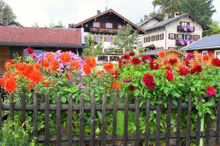 Chiemsee Fraueninsel Dahliengarten