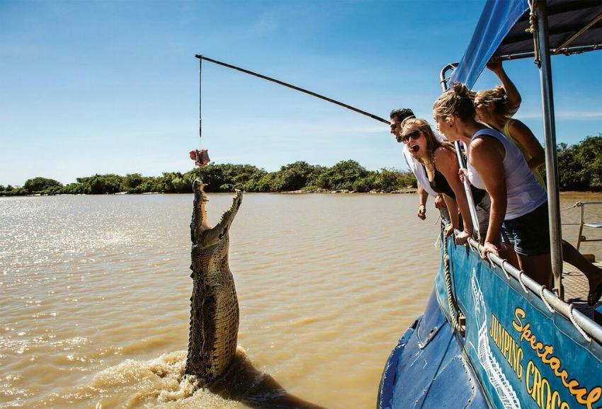 Australien Krokodil