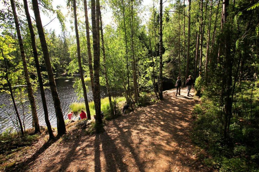 Reise nach Finnland Wald