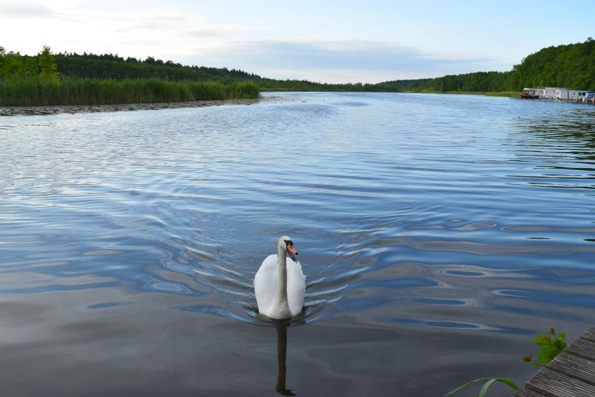All Season Park Mirow Mecklenburgische Seenplatte Schwan