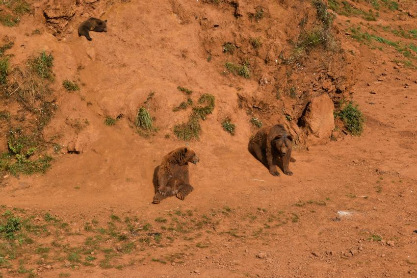 Besuch im Naturpark Cabárceno Bären