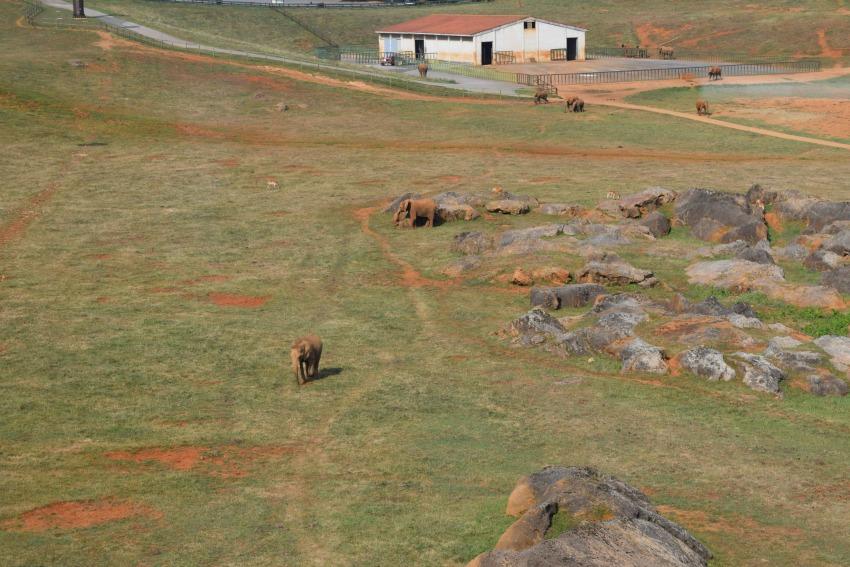 Besuch im Naturpark Cabárceno Elefanten