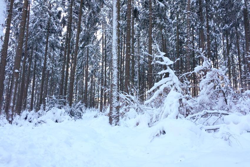Rodeln im Harz Schnee auf dem Wurmberg
