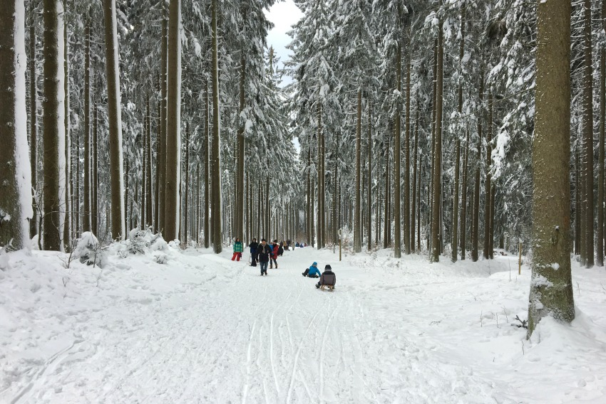 Rodeln im Harz Wurmberg