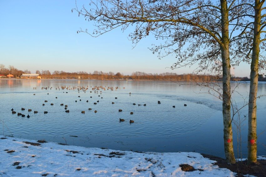 Winterspaziergang am Lohner See 6