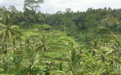 Ubud Highlights