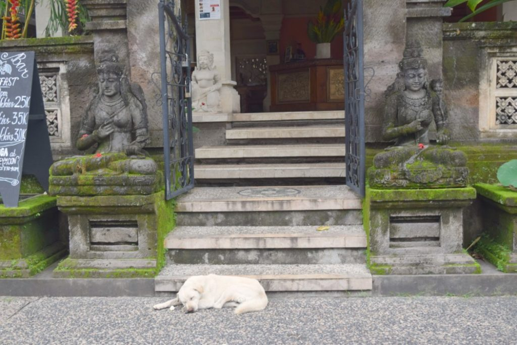 Ubud Highlights Hund