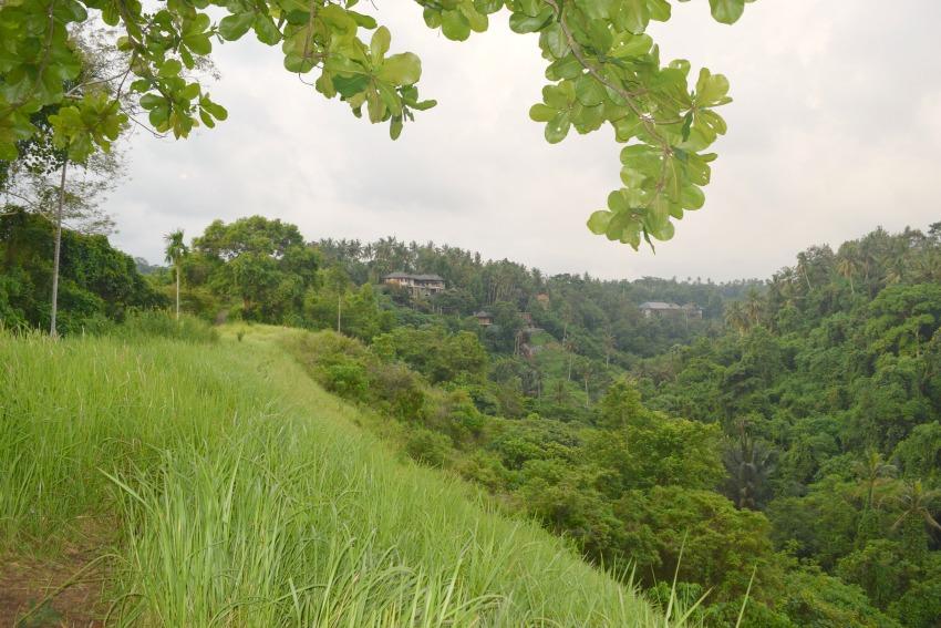 Ubud Highlights Spaziergang Reisfelder