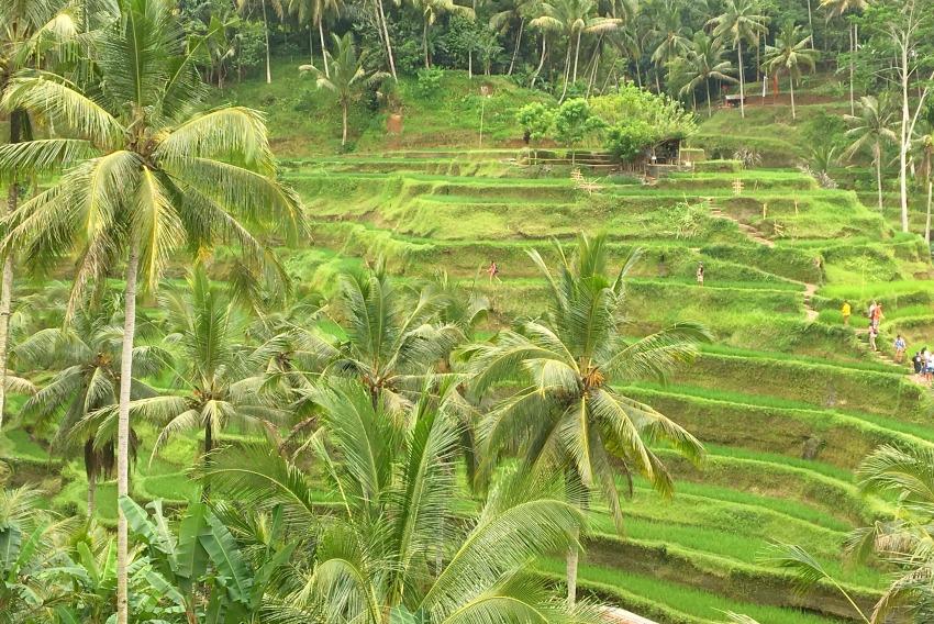 Ubud Highlights Tegallalang Reisterrassen