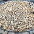 Kopie Luwak Wie der teuerste Kaffee der Welt aus Katzenkot hergestellt wird