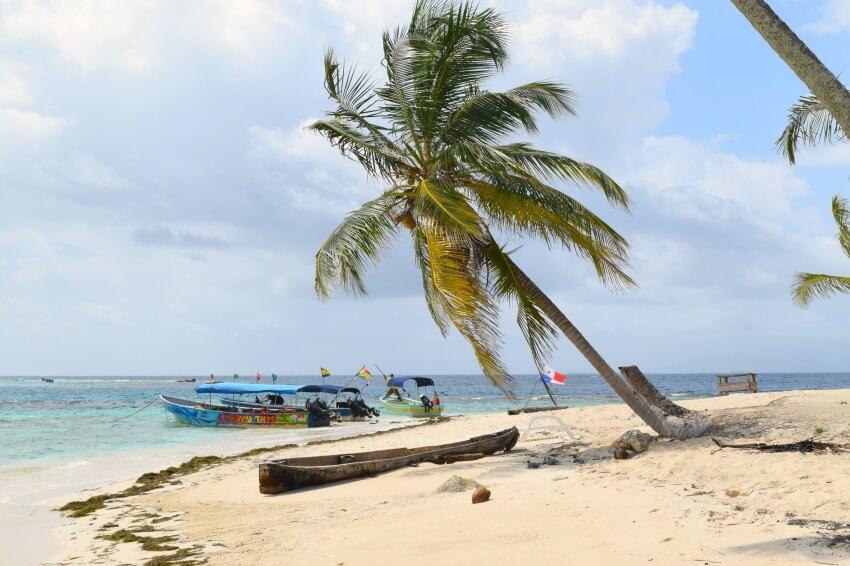 San Blas Inseln Isla Perro Palme
