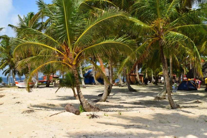 San Blas Inseln Isla Perro Palmen