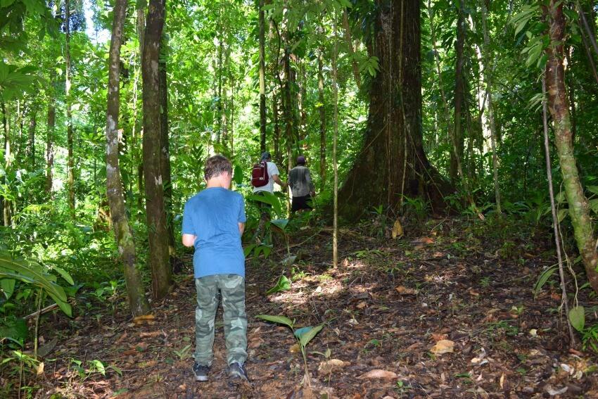 Isla Popa - Dschungel