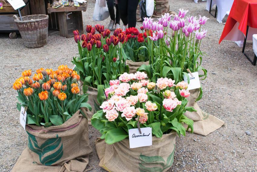 Herbstfestival auf Schloss Ippenburg Blumen