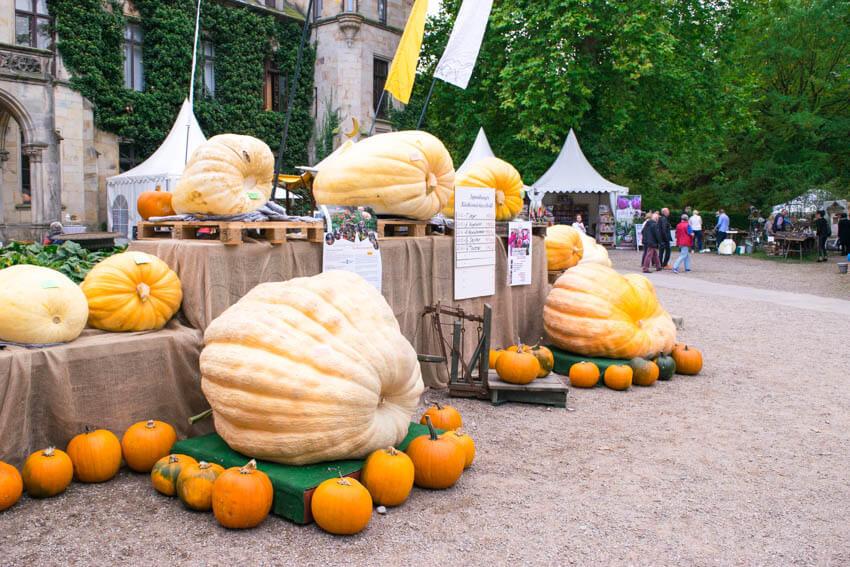 Herbstfestival auf Schloss Ippenburg Kürbis Olympiade
