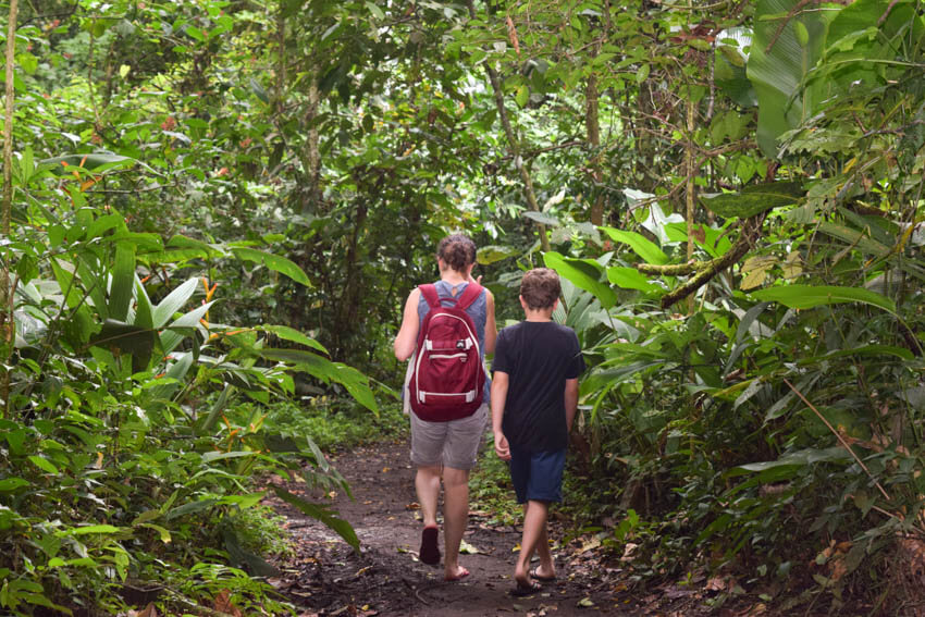 Tortuguero Nationalpark in Costa Rica Wanderung Regenwald