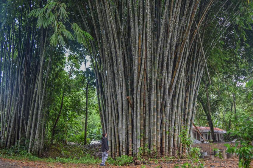 Costa Rica Roadtrip Puerto Viejo Bambus