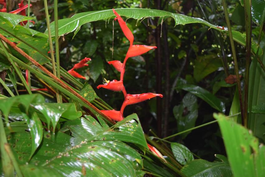 Costa Rica Roadtrip Puerto Viejo Blume