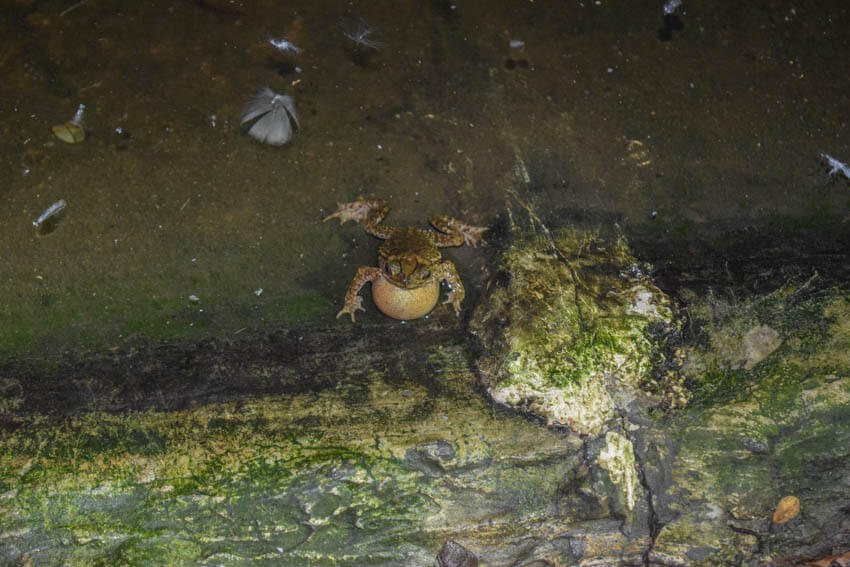 Costa Rica Roadtrip Puerto Viejo Frosch