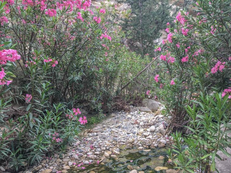 Zypern Tipps - Avakas Schlucht Blumen