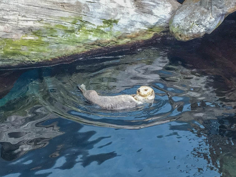Lissabon Aquarium Otter