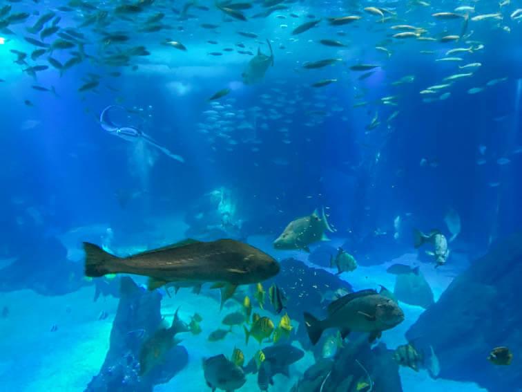 Lissabon Aquarium