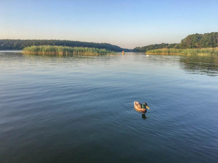 Floßfahrt auf der Mecklenburgischen Seenplatte Ente