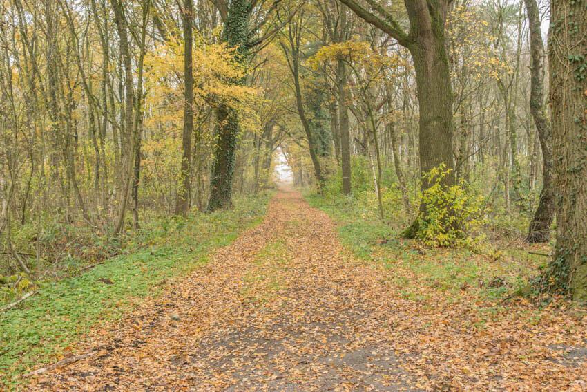Waldweg zum Moor