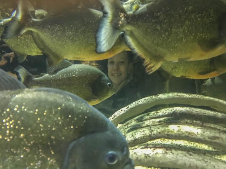 Kopf im Aquarium