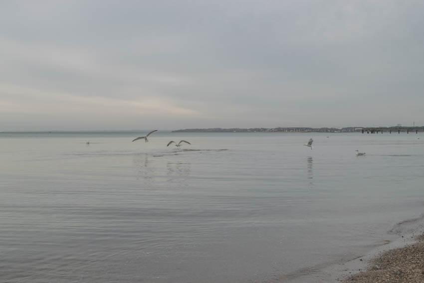 Timmendorfer Strand Möwen